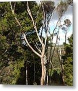 Tree Tops And Beyond Metal Print