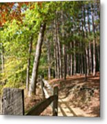 Tree Trail Metal Print