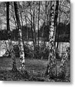 Tree Quartet And The Lake Metal Print