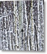Tree Trunks Covered With Snow In Winter Metal Print