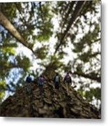 Tree Walkers Metal Print