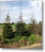 Perfectly Placed Trees Metal Print