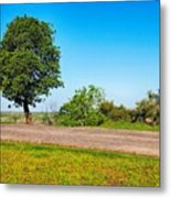 Tree With A View Metal Print