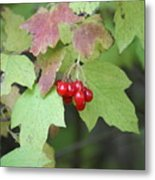 Tree With Red Berry Metal Print