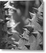 Tree With Spikes And Thorns Metal Print