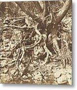 Tree With Tangle Of Roots Metal Print