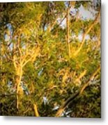 Tree With V Shaped Branches Metal Print