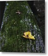 Tree With Yellow Leaf Metal Print