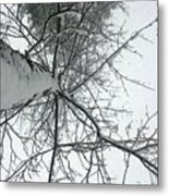 Tree Wrapped In Snow Metal Print