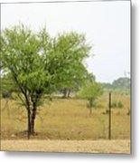 Trees 011 Metal Print