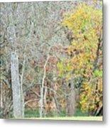 Trees 024 Metal Print