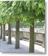 Trees All In A Row Metal Print