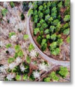 Trees And Path From Above Drone Photography Metal Print
