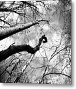 Trees And Vines Metal Print