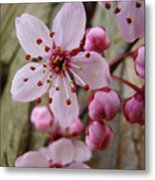 Trees Art Prints Canvas Pink Blossoms Spring Blue Sky Baslee Troutman Metal Print