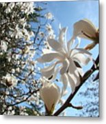 Trees Art Prints White Magnolia Flowers Baslee Troutman Metal Print