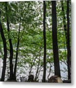 Trees At Lake Schlachtensee Metal Print