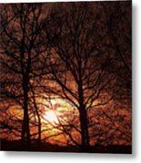 Trees At Sunset Metal Print