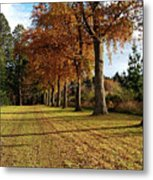 Trees At The Park Metal Print