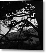 Trees Black And White - San Salvador Metal Print