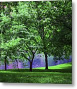 Trees By A Pond Metal Print