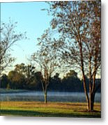Trees By The Water Metal Print
