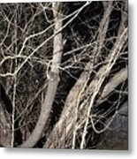 Trees Closeup Metal Print