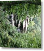 Trees Fallingwater  Metal Print