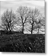 Trees In April Metal Print