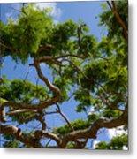 Trees In Bermuda Metal Print