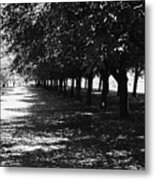 Trees In Chicago Metal Print