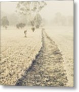 Trees In Fog And Mist Metal Print