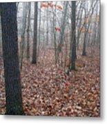 Trees In Foggy Fall Woods Metal Print