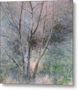 Trees In Light Metal Print