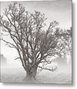 Trees In Mist- St Lucia Metal Print