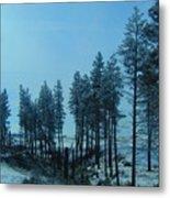 Trees In Northwest Metal Print