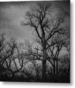 Trees In Storm In Black And White Metal Print