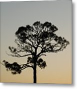 Trees In Sunset Metal Print