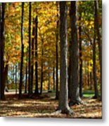 Tree's In The Forest Metal Print