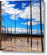 Trees In The Midway Geyser Basin Metal Print