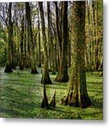 Trees In The Swamp Metal Print