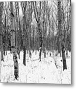 Trees In Winter Snow, Black And White Metal Print