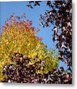 Trees Landscape Blue Sky Art Prints Fall Leaves Metal Print