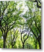 Trees Of Central Park, Nyc Metal Print