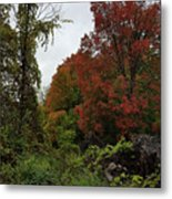 Trees Of Colorful Leaves In Autumn Mi Metal Print