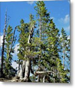 Trees On The Edge 1 Metal Print