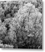 Trees On The River Metal Print