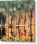 Trees Reflecting Metal Print