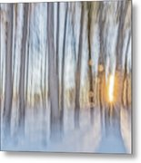 Trees, Snow And Golden Light Abstract Metal Print