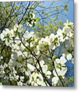 Trees Sunlit White Dogwood Art Print Botanical Baslee Troutman Metal Print